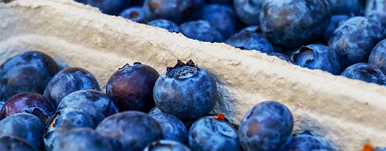 Crates of blueberries