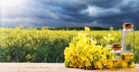 Plant Oils Are Not a Healthy Alternative to Saturated Fat