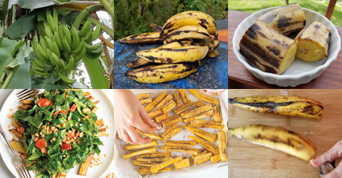 5 Ways to Cook and Prepare Ripe Plantains