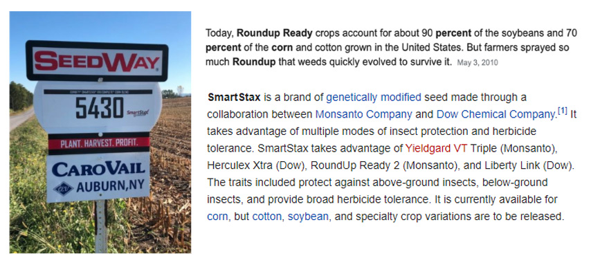 Roundup-Ready®, Grasshoppers and Animal Protein Are Connected
