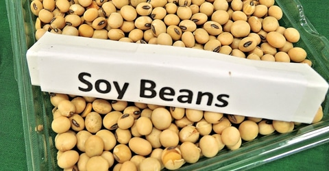 Setting the Record Straight About Soy - Myths vs Facts