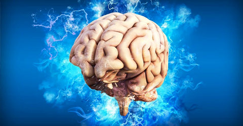 """Response to Medical News Today's Article: """"Plant-Based Diet May Prevent Cognitive Decline"""""""