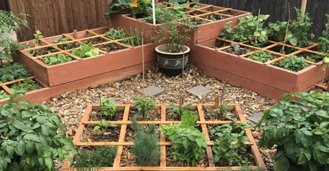 Step-By-Step Guide on How to Create a Square Foot Garden