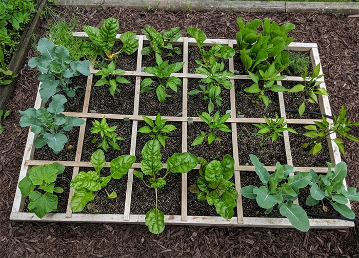 Step By Step Guide on How to Create a Square Foot Garden