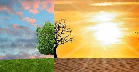 Nuestras opciones alimenticias y el calentamiento global