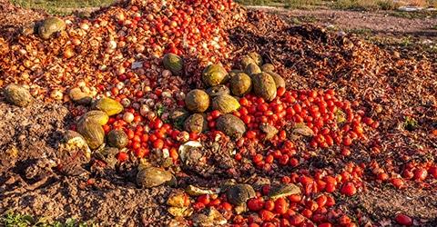 Reducción del desperdicio de alimentos en toda la cadena de suministro: Estadísticas & Estrategias