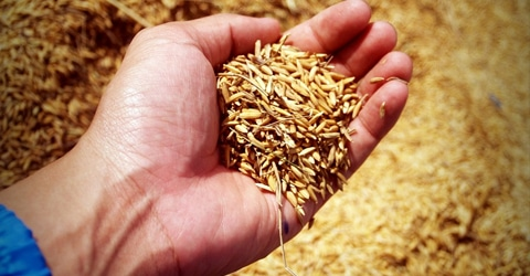 Sowing Seeds for the Next Generation - Why We Need Sustainable Farming