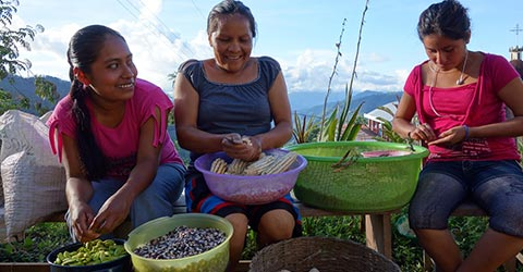 three women collecting seeds