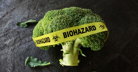 Are GMOs Safe? Asking the Right Questions About GMOs