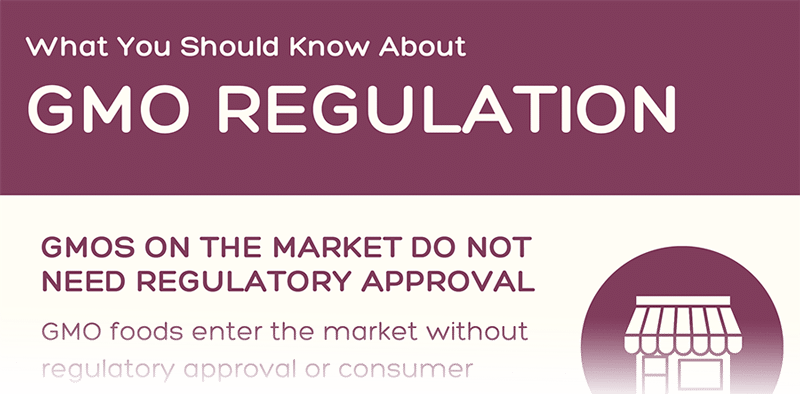 Preview of GMO Regulation Infographic