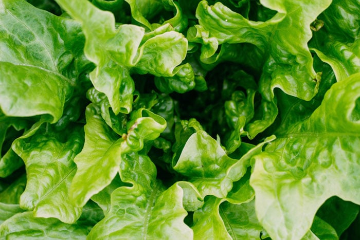 How to Start a Sustainable At-Home Garden