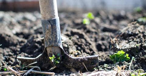 Cómo iniciar un jardín sostenible en casa