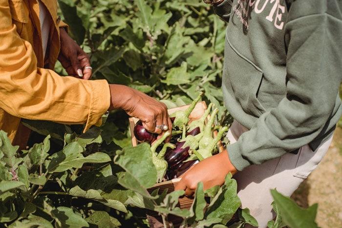 Carbondale Spring Food Autonomy Initiative