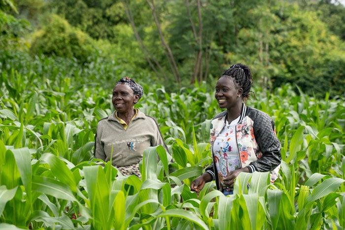 Agroforestry in Kenya