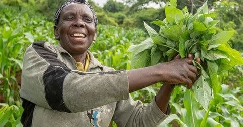 Protech Eco-Green Practices Sustainable Farming & Agroforestry in Kenya