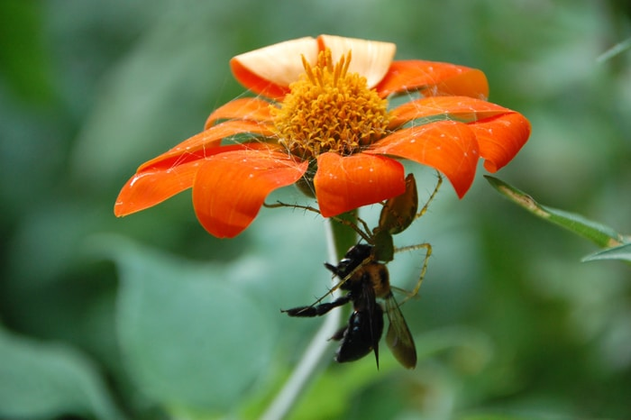 U.S. Honey Bees