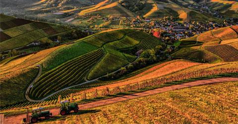 ¿Puede el uso de prácticas regenerativas salvar la agricultura?