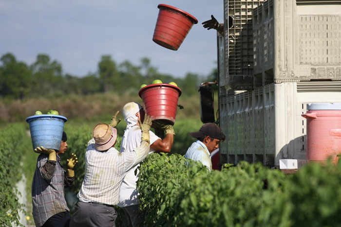 Book Excerpt: I Am Not a Tractor! How Florida Farmworkers Took On the Fast Food Giants and Won